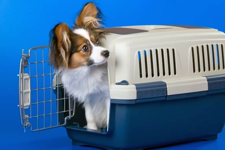 How to Soundproof a Dog Crate/Cage and Kennel - Best Ways