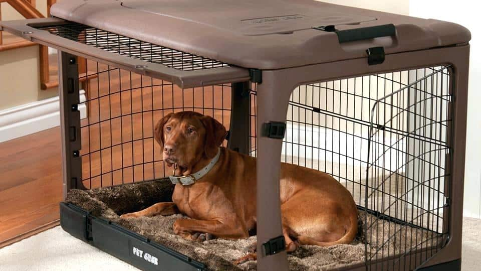 How to Soundproof a Dog Crates and Kennels